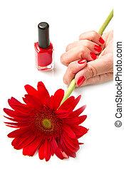 vermelho, mulher, flor, manicure, mãos