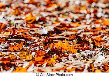 vermelho, outono sai, fundo, em, estação queda