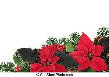 vermelho, poinsettia, flor, borda