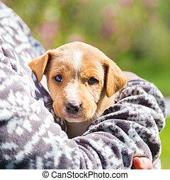 vermengde-ras, schattig, weinig; niet zo(veel), puppy, in,...