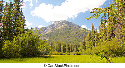 Vermillion Lakes Fernland - View on the green fern land of...
