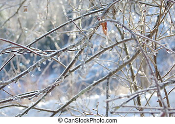 Vermont Ice Storm - Picture of tree branches after freezing...