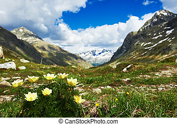 Scenic Alps mountains landscape in spring. Vernal flowers on highland meadow