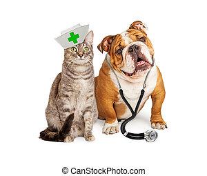 verpleegkundige, dierenarts, dog, kat