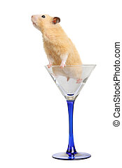 verre, hamster