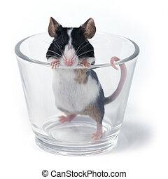 verre, of..., souris