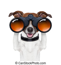 verrekijker, het kijken, verrichtend, grondig, dog