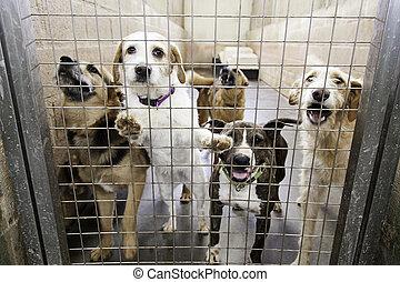 verrouillé, chenil, chiens