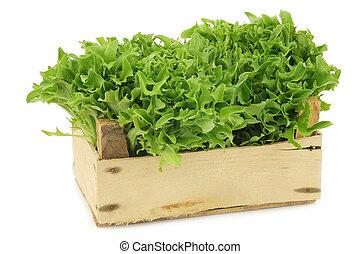 vers, oogsten, groene, krullende lettuce, in, een, ?????? ????ß?