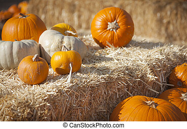 vers oranje, pompoennen, en, hooi, in, rustiek, herfst, vatting