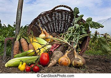 versamento, vimine, verdura, cesto, seasnon, raccogliere
