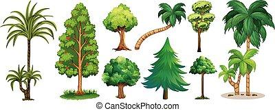 verschieden, arten, von, bäume