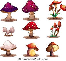 verschieden, arten, von, pilze