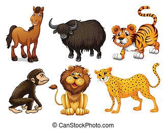 verschieden, arten, von, vierbeinig, tiere