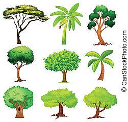 verschieden, bäume