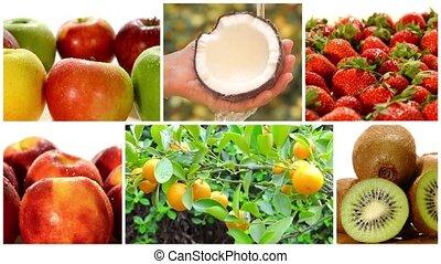 verschieden, früchte, und, obstbäume, coll
