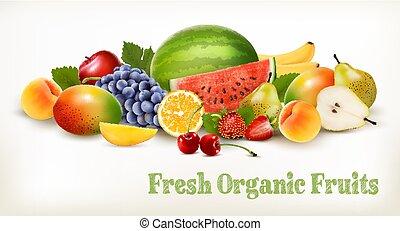 verschieden, groß, fruit., sammlung, vector., frisch