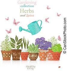 verschieden, satz, kraeuter, gepflanzt, design, schablone, ethnisch, fl