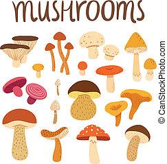 verschiedene arten pilze, satz, vektor, abbildung