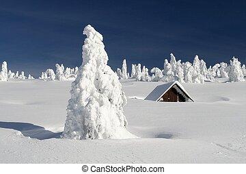 verschneiter , ebene, mit, a, snowbound, hütte