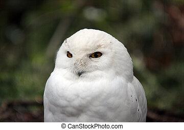verschneiter , owl., foto, genommen, an, nordwesten, treck,...