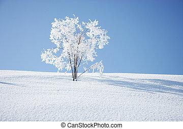 verschneiter , wiese, und, bäume