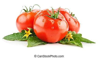 verse tomaten, groentes