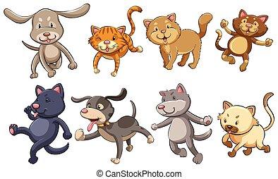 verspielt, katzen, gruppe, hunden