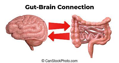 verstehen, wichtig, kommunikation, aufgang, diese, darm, organe, brain-gut, solch, zwischen, krankheiten, connection., flora, rolle, depression.