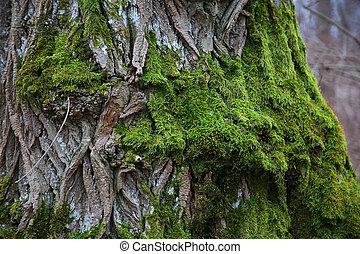 vert, écorce, arbre, mousse, couvert