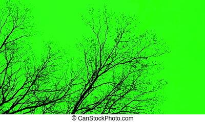 vert, écran, branches