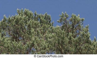 vert, été, arbres, après-midi, feuilles, branches