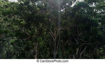 vert, 4k, arbres, forêt