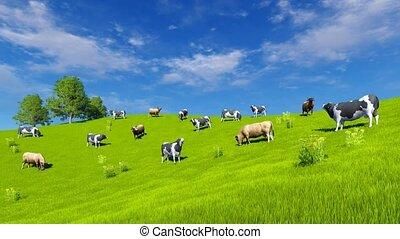 vert, 4k, vaches, pâturage, pâturage, laitage