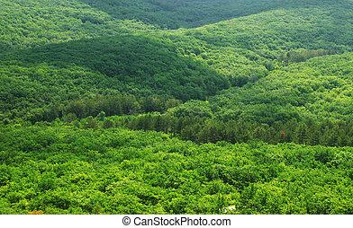 vert, aérien, forêt, vue