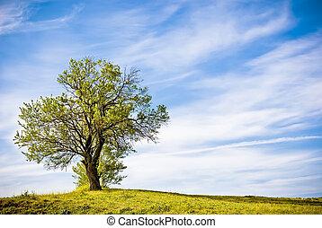 vert, arbre, paysage,  nature
