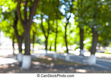 vert, automne, ruelle, fond, arbres, ville