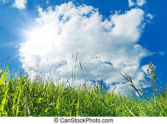 vert bleu, herbe, ciel, fond