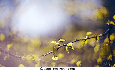 vert, bouleau, branches, fond, impasses