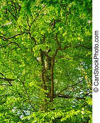 debout t arbre ch ne vert grand seul debout t photographie de stock rechercher. Black Bedroom Furniture Sets. Home Design Ideas