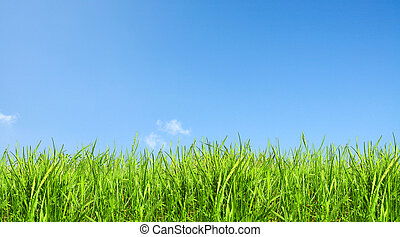 vert, clair, herbe, ciel