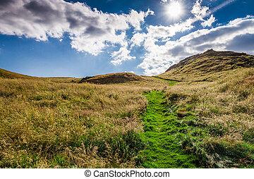 vert, ecosse, colline, plomb, sentier