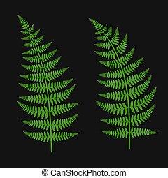vert, ensemble, feuille, fougère