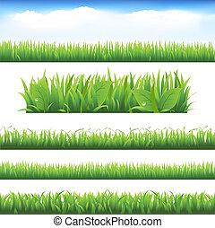 vert, ensemble, herbe, pousse feuilles
