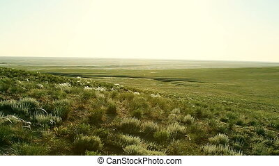 vert, ensoleillé, steppe, jour