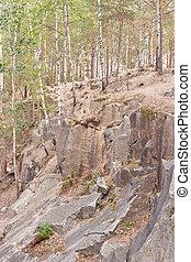 vert, Envahi, rochers, forêt