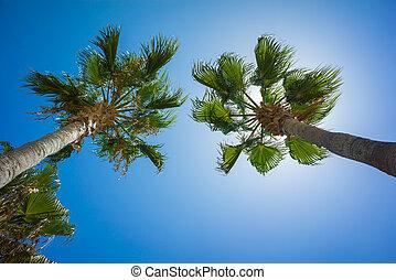 vert, exotique, cocotier, arbres, dans, les, bleu, ensoleillé, ciel