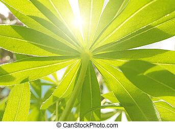 soleil for t verte enchant paysage rayons coulage soleil arbres for t feu vert par. Black Bedroom Furniture Sets. Home Design Ideas