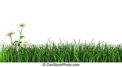 vert, fleurs, herbe, pâquerette