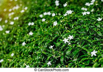 vert, fleurs, naturel, arrière-plan.